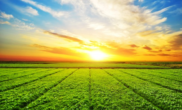 Top Agricultural States in India