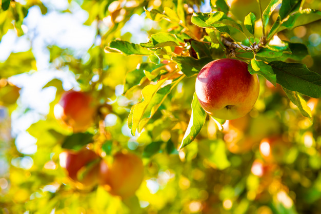 Tips on How to Grow Fruits.