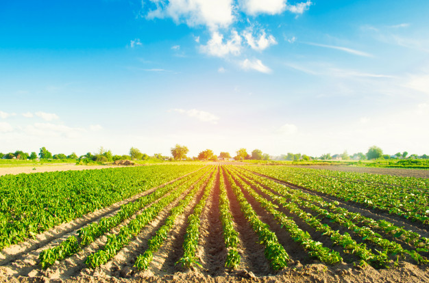 Reasons Why Organic Farming Are More in Demand.