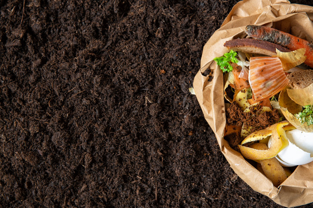Composting at Home: Your Guide to Better Fertilizer